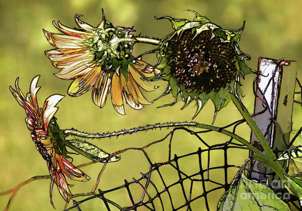 Sunflower Seeds Photograph - Sunflowers On A Fence by Susan Isakson