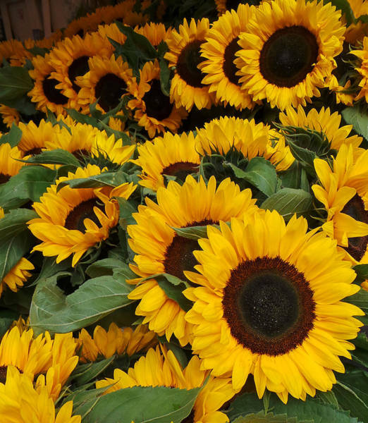 Photograph - Sunflowers by Pat Moore