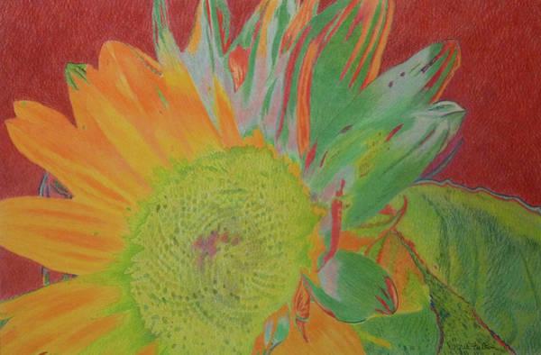 Drawing - Sunjoy by Cris Fulton