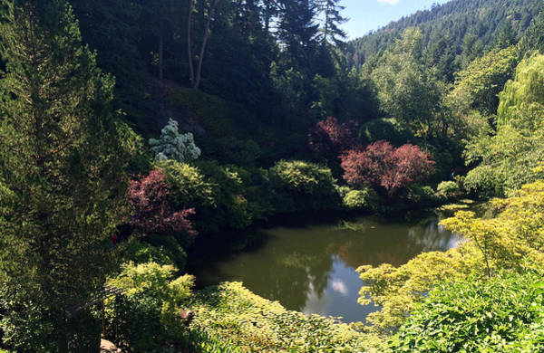 Photograph - Sunken Lake Butchart Garden by Portraits By NC