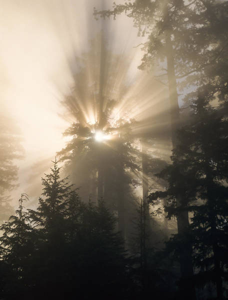 Photograph - Sunlight And Fog by Robert Potts