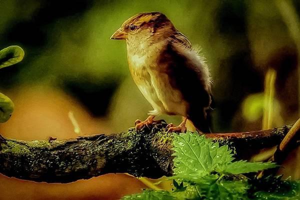 Photograph - Sunlight Bird by Cliff Norton