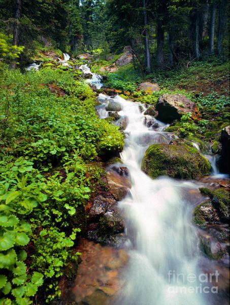 Photograph - Sunlight Creek by Craig J Satterlee