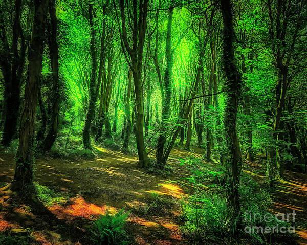 Photograph - Sunlight Green by Edmund Nagele