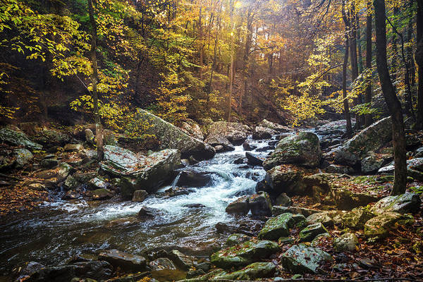 Cloudland Canyon Photograph - Sunlight In The Mist by Debra and Dave Vanderlaan