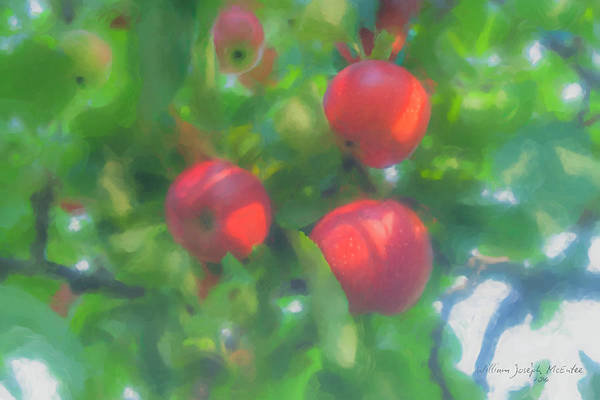 Painting - Sunlight On Apples by Bill McEntee