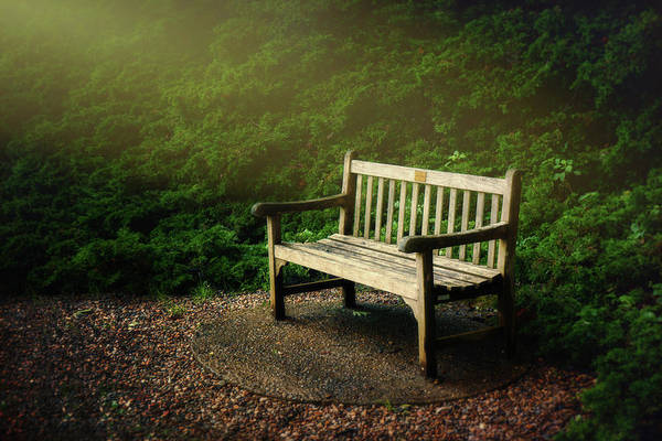Shrubs Photograph - Sunlight On Park Bench by Tom Mc Nemar