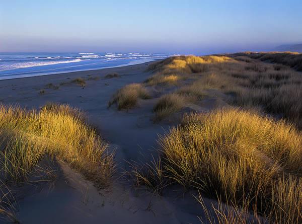 Photograph - Sunlight On The Beach Grass by Robert Potts