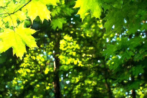 Photograph - Sunlight Shines Through Green Leaves Oil Style by John Williams