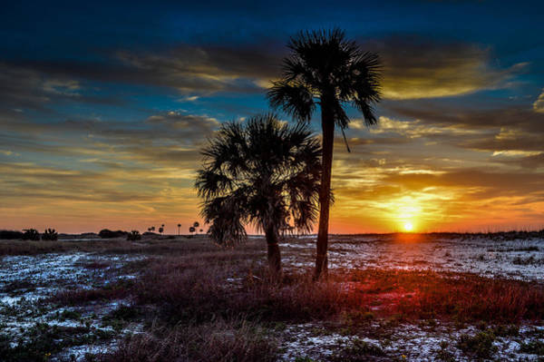 Photograph - Sunlight Thru The Palms by Michael Thomas
