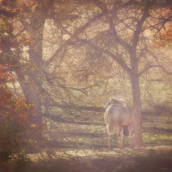 Photograph - Sunlight's Serenity by Amanda Smith