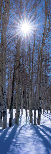 Flagstaff Photograph - Sunlit Aspens by Mikes Nature