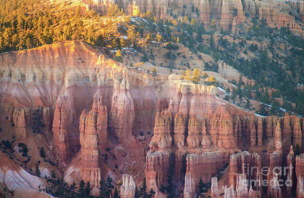 Wall Art - Photograph - Sunlit Bryce Canyon  Column Details by Mike Reid
