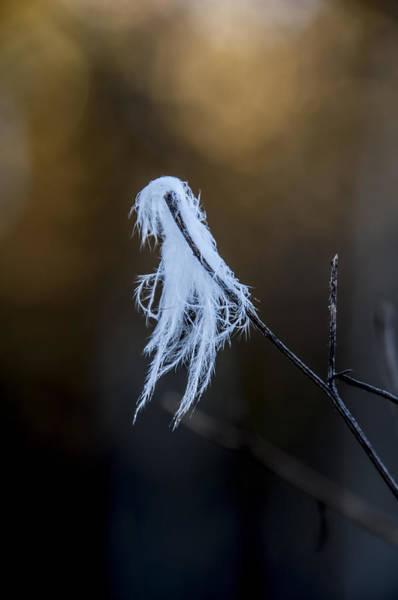Photograph - Sunlit Eagle Plumage by Christina VanGinkel