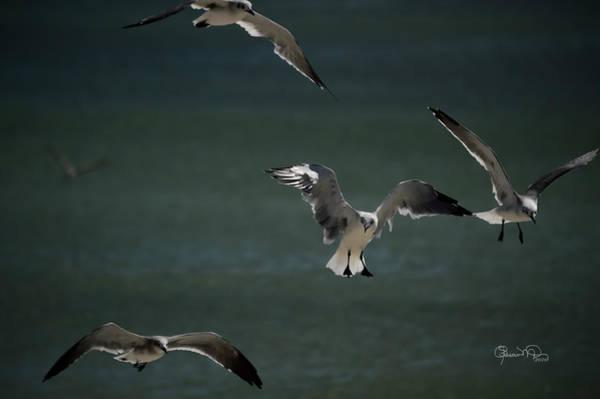 Photograph - Sunlit Gulls by Susan Molnar