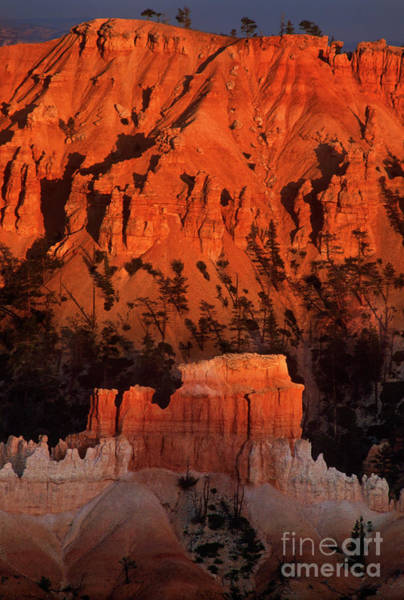 Photograph - Sunlit Hoodoo In Bryce Canyon National Park Utah by Dave Welling