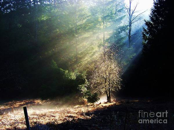 Photograph - Sunlit by Julie Rauscher