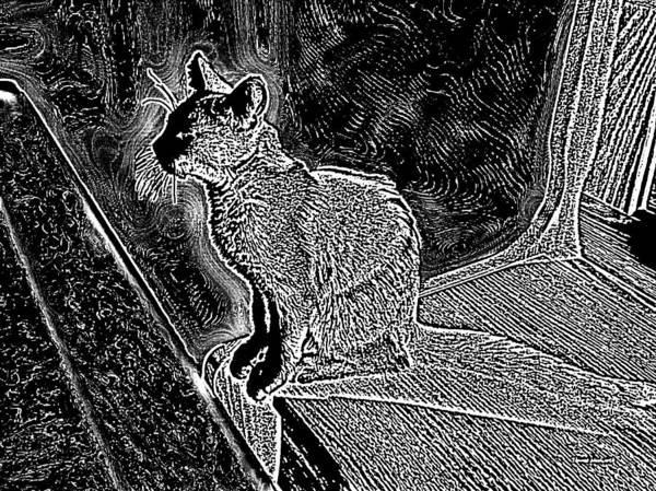 Wall Art - Photograph - Sunlit Kitty Black And White by Thomas Woolworth