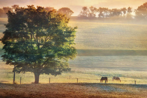 Wall Art - Photograph - Sunlit Pasture by Lori Deiter