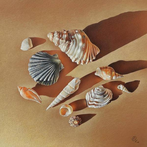 Drawing - Sunlit Shells by Elena Kolotusha