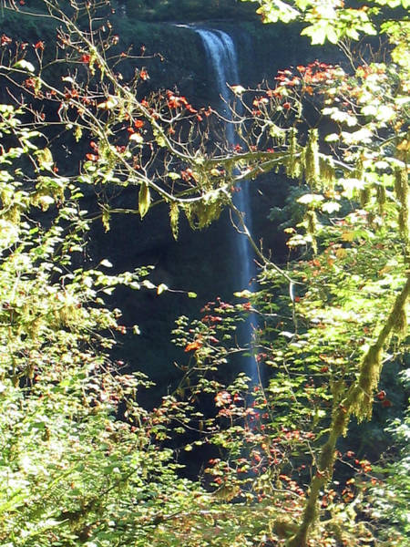 Photograph - Sunlite Silver Falls by Thomas J Herring