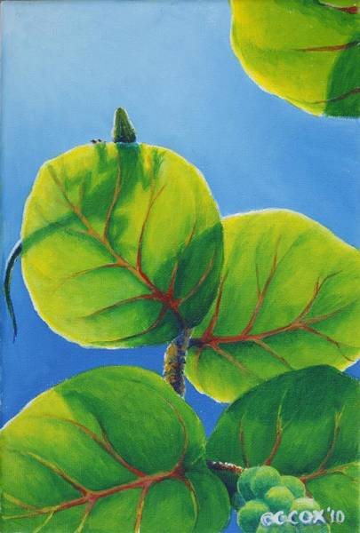 Painting - Sunning On Seagrapes by Christopher Cox