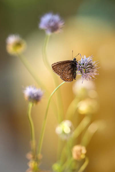 Nature Wall Art - Photograph - Sunny Afternoon Impression With Small Butterfly by Jaroslaw Blaminsky
