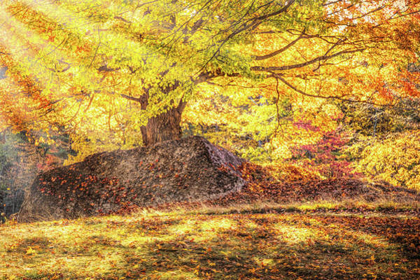 Photograph - Sunny Afternoon On Autumn Hill by Jeff Folger