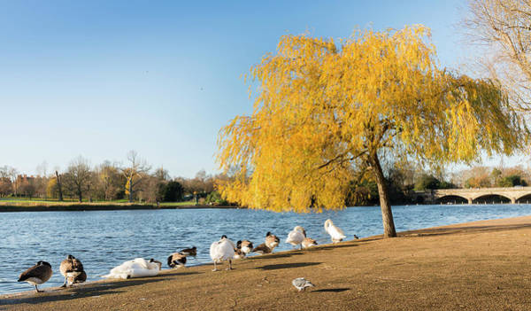 Photograph - Sunny Autumn Day In Hyde Park, London by Alexandre Rotenberg