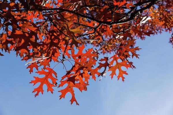 Photograph - Sunny Autumn - by Georgia Mizuleva