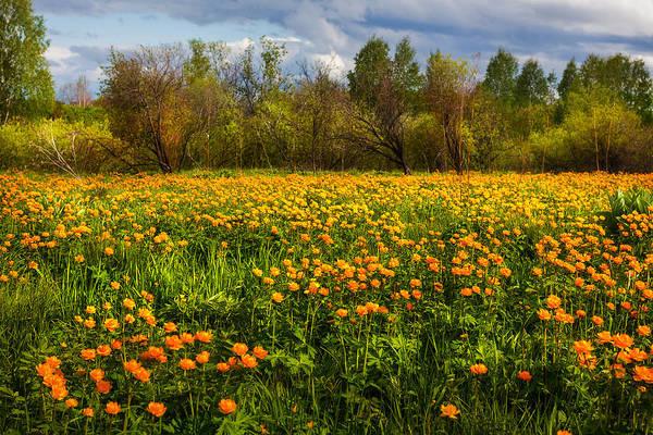 Photograph - Sunny Buttercups Field. Altai by Victor Kovchin