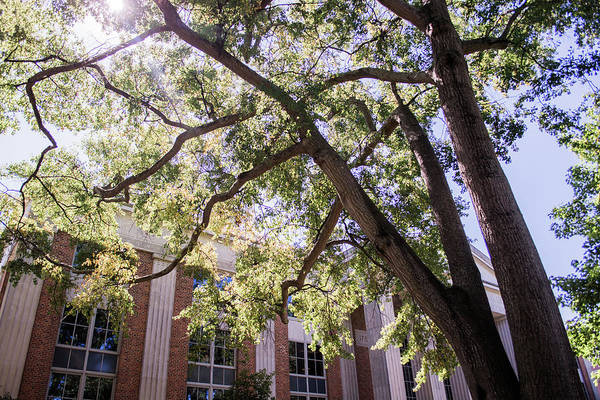 Photograph - Sunny Days At Uga by Parker Cunningham