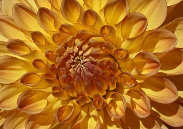 Sunny Delight Art Print by Monnie Ryan