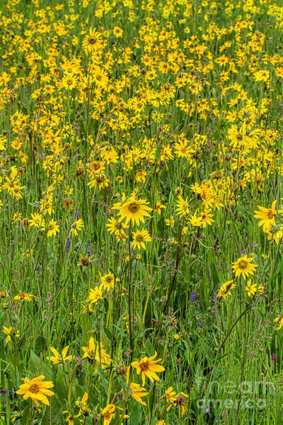 Photograph - A Sunny Disposition by Jim Garrison