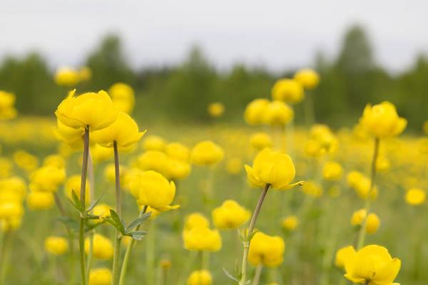 Photograph - Sunny Flowers by Natalia Otrakovskaya