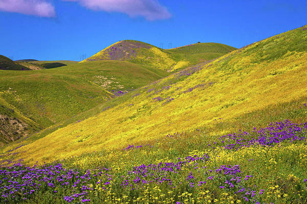 Wall Art - Photograph - Sunny Side Up Superbloom 2017 by Lynn Bauer
