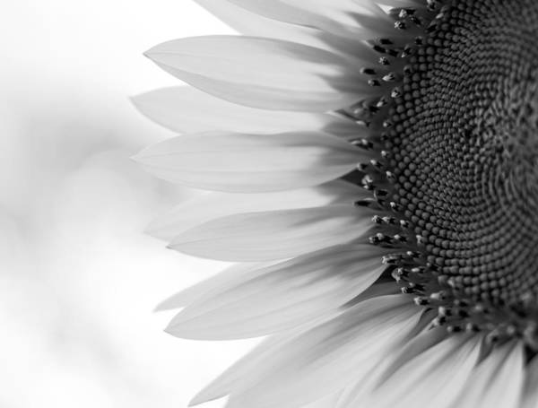 Photograph - Sunny Sunflower Black And White by Terry DeLuco