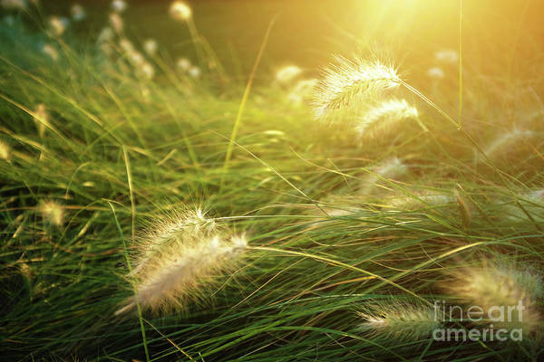 Spikes Photograph - Sunny Vegetation by Carlos Caetano