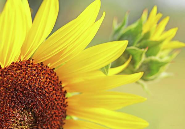 Sunflower Seeds Photograph - Sunny Yellow Sunflower by Jennie Marie Schell
