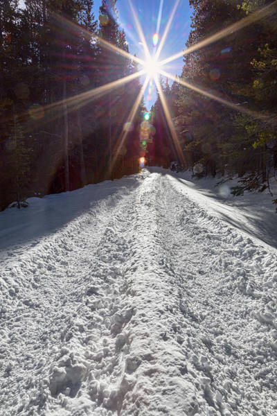 Photograph - Sunrays And Snow by James BO Insogna