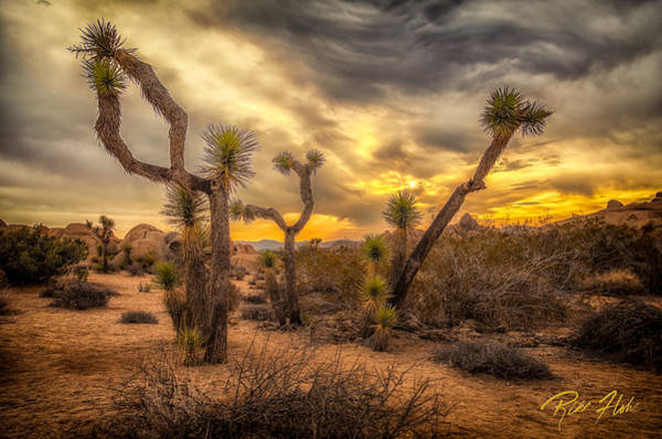 Photograph - Sunrise Amid The Joshua Trees by Rikk Flohr