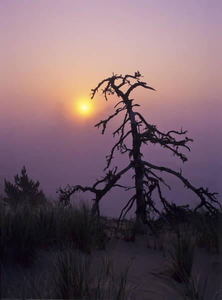 Photograph - Sunrise And Fog by Robert Potts
