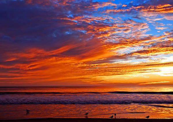 Sunrise And Seagulls Art Print
