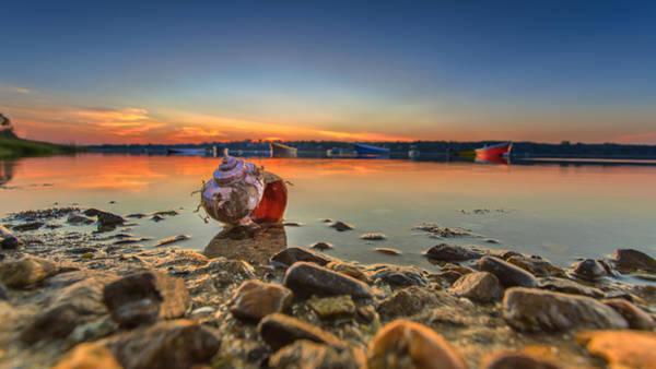 Wall Art - Photograph - sunrise and Shell On The Beach by Dapixara Art