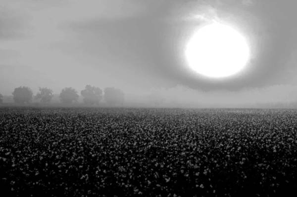 Digital Art - Sunrise And The Cotton Field Bw by Michael Thomas