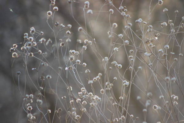 Photograph - Sunrise And Wildflowers by Colleen Cornelius