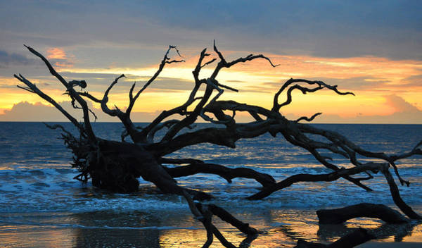 Sunrise At Driftwood Beach 1.1 Art Print