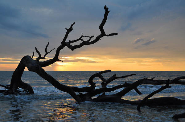 Sunrise At Driftwood Beach 1.2 Art Print