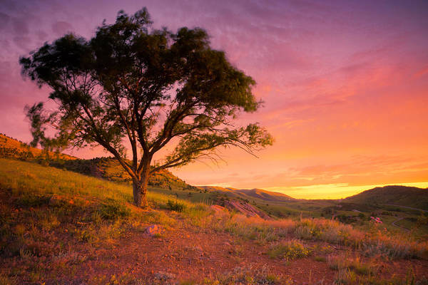 Photograph - Sunrise At One Tree Hill by John De Bord