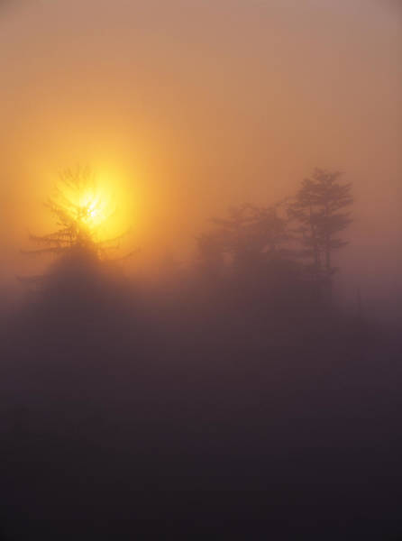 Photograph - Sunrise At Oregon Dunes National Recreation Area by Robert Potts